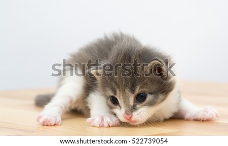 Small gray kitten on a wooden background