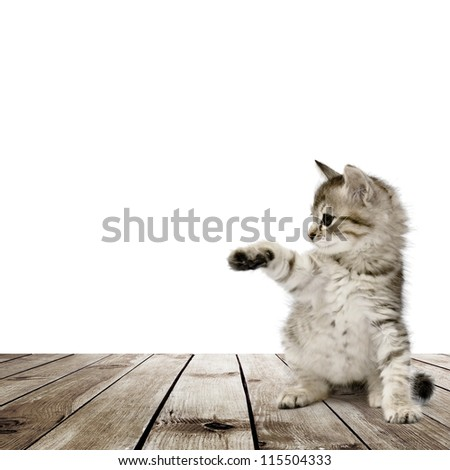 Small gray kitten on wood floor over white background