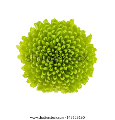 Small green flower isolated on white background - stock photo