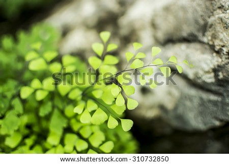 Small green leaves and stone background