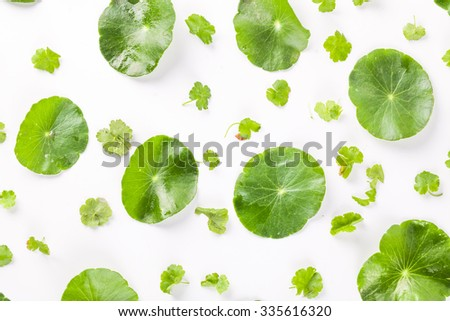 small green leaves patterned on white background, creative texture studio shot - stock photo