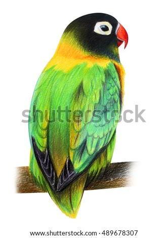 Small green parrot love bird