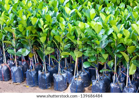 small green plant - stock photo