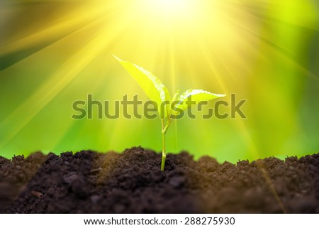 Small green plant in sunlight. Seedling concept. - stock photo