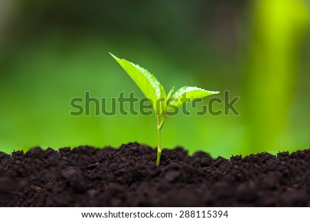Small green plant. Seedling concept. Small depth of field. - stock photo