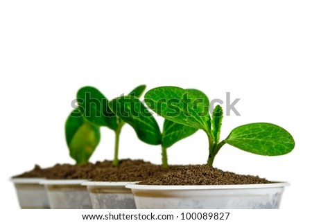 small green plants isolated on a white background