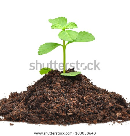 Small green sapling growing out from heap of soil