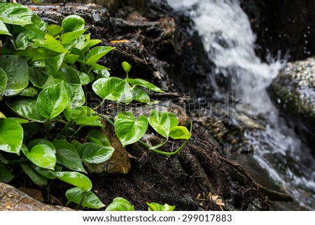 Small green tree with blurry waterfall as background