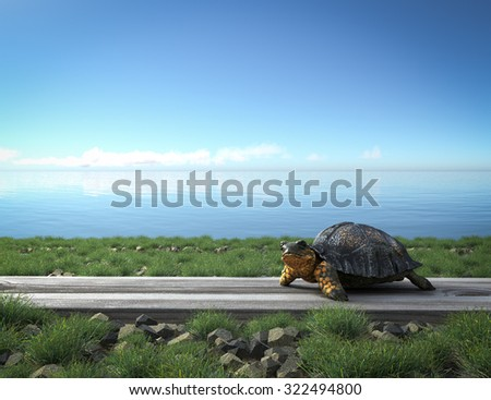 Small green turtle on the beach. Tourism concept background - stock photo