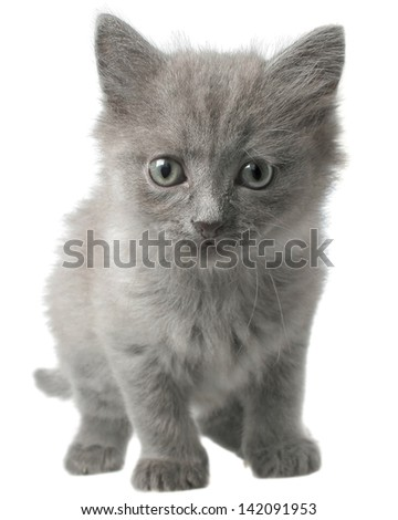 Small grey kitten go ahead isolated on white background.