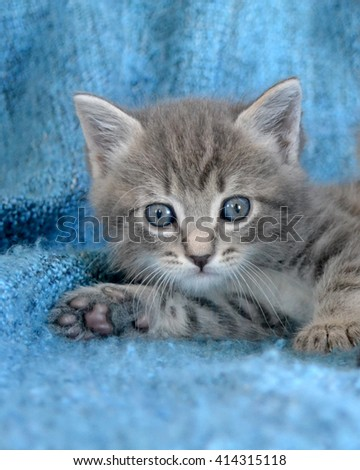 Small grey tabby kitten lying down with paw pads showing - stock photo