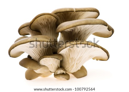 small group of oyster mushroom - stock photo