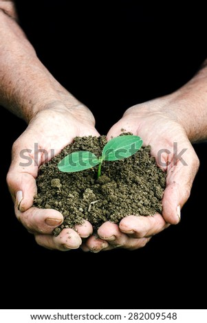 Small growing green plant in the old female hands,selective focus and blank space - stock photo
