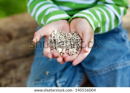 Small hands holding a sunflower seeds in summer - stock photo