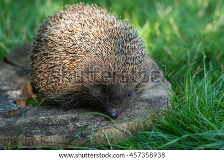 small hedgehog on wooden circle
