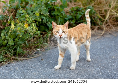 Small homeless cat on a yard   - stock photo