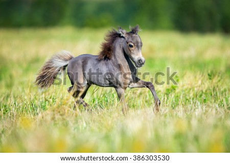 Small horse running in field - stock photo
