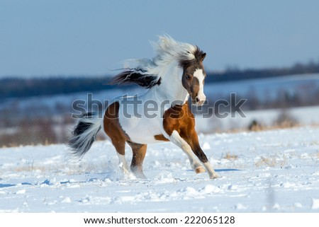 Small horse running in the snow in field - stock photo