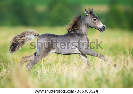 Small horse. Small horse galloping. Foal runs on green background - stock photo