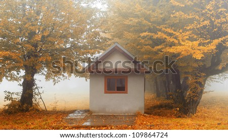 Small house in foggy forest. Autumn weather - stock photo