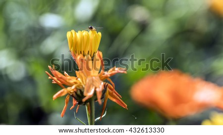 Small insect on a yellow flower petals - stock photo
