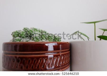 Metro details stock photo 434921830 shutterstock - Beautiful house plants ...