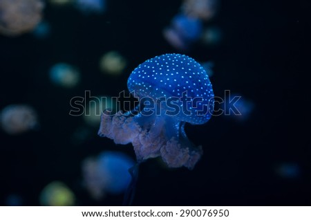 Small Jelly Fish Medusa Colored by the Light - stock photo