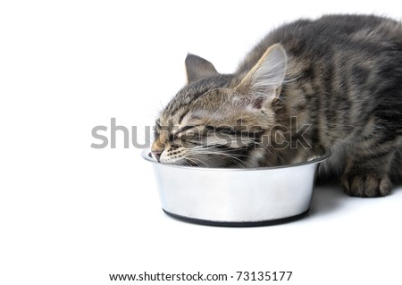 small kitten eating. isolated on white background - stock photo