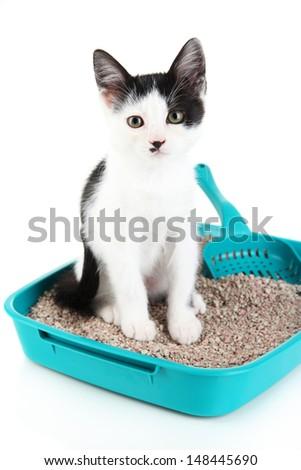 Small kitten in blue plastic litter cat isolated on white - stock photo