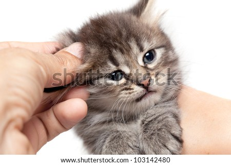 Small kitten in hands of the person