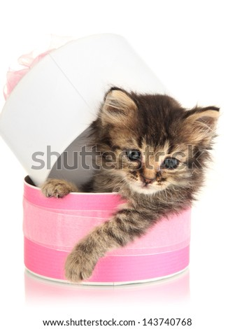 Small kitten in pink gift box isolated on white - stock photo