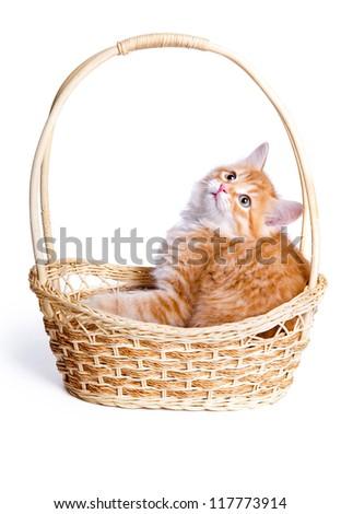 Small kitten in straw basket. - stock photo