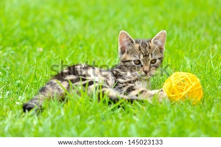 Small kitten is playing with ball in the garden.