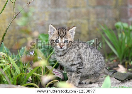 Small kitten looking curiously into the garden - stock photo