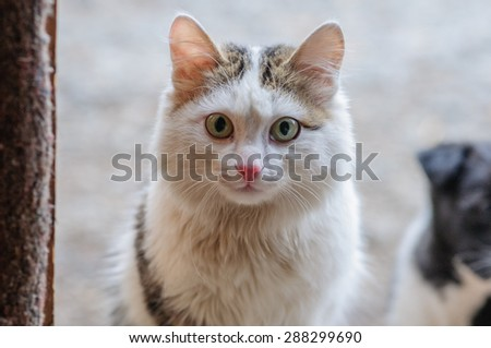 Small kitten looking in a doorway in a rural house - stock photo