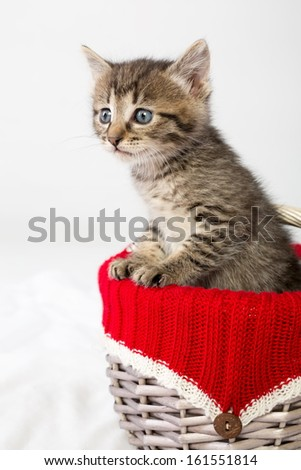 Small kitten looking out of a wicker basket - stock photo