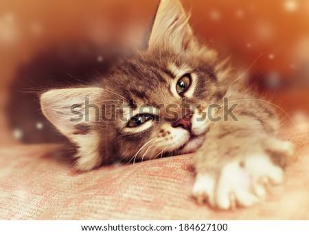 Small kitten lying on sofa - stock photo
