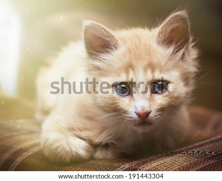 Small kitten lying on sofa - stock photo