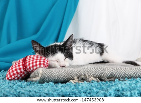 Small kitten on blue carpet on fabric background