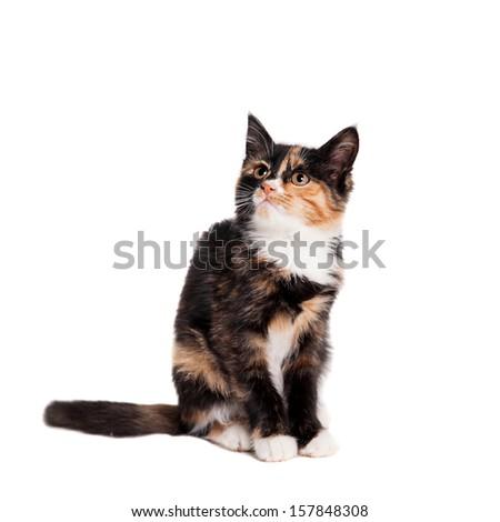 Small kitten on the white background - stock photo