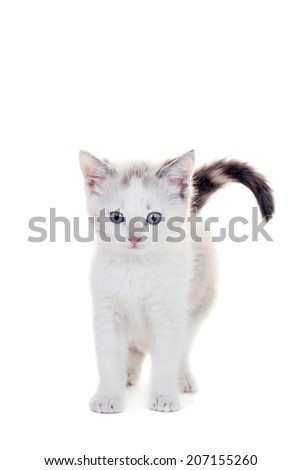 Small kitten on white - stock photo