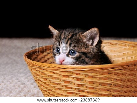 Small kitten sitting in a basket - stock photo