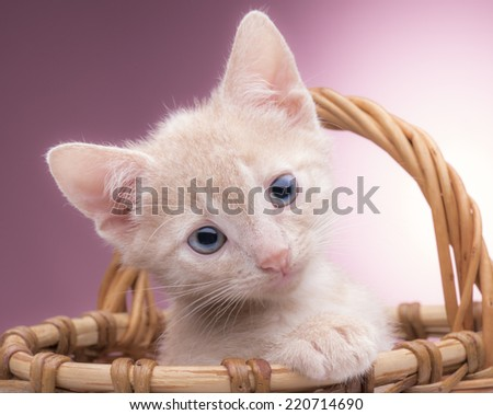 small kitten sitting in a basket in the studio on a pink background - stock photo