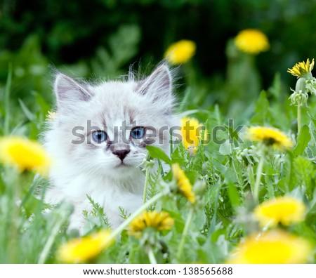 small kitten sitting in flowers - stock photo