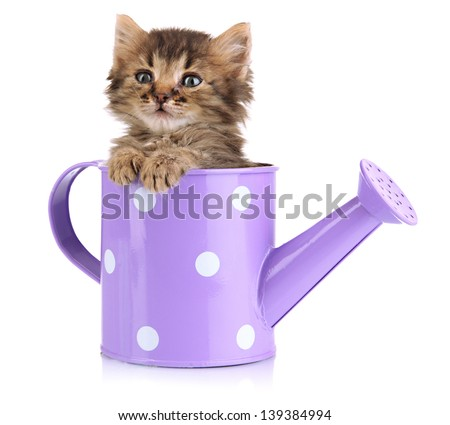 Small kitten sitting in watering can isolated on white - stock photo