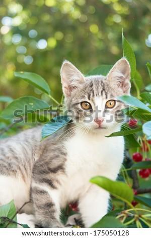 Small kitten sitting on the cherry tree - stock photo