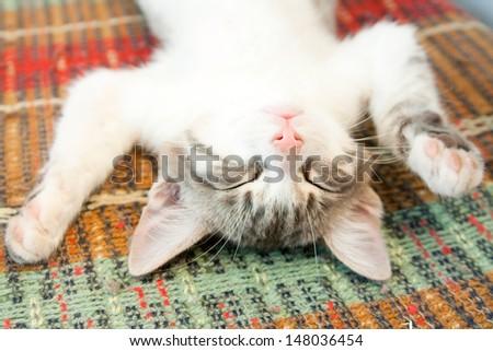 Small kitten sleeping on the bench - stock photo
