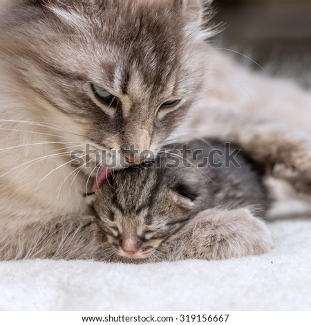 small kitten with mother close up