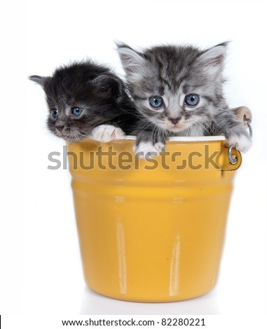 Small kittens on a white background. Age - 1 month - stock photo