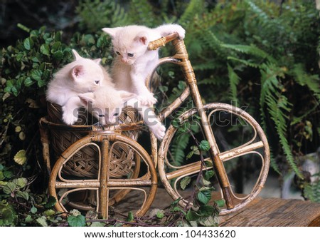Small kittens playing on the garden - stock photo